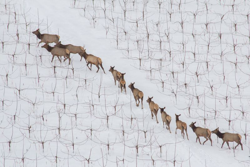 Awe inspiring aerial drone photos of animal herds in nature